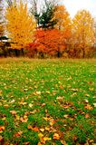 Autumn foliage and lawn. Stock Images