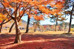 Autumn foliage leaves in Nara park Stock Images