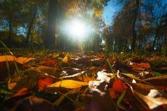 Autumn foliage, locust trees and blue sky Stock Photos