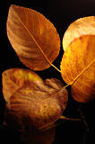 Autumn foliage Royalty Free Stock Photography