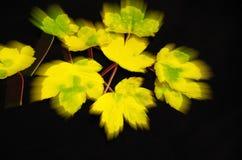 Autumn foliage Stock Image