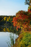 Autumn foliage, maple tree branches against lake and sky. Sunny day in park. Royalty Free Stock Image