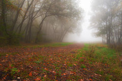 Autumn foliage and morning mist in the forest Stock Images