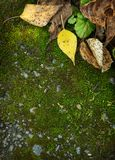 Autumn foliage on moss Royalty Free Stock Image