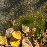 Autumn foliage on moss Royalty Free Stock Images