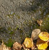 Autumn foliage on moss Stock Photography