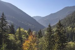 Autumn foliage in mountain valley Stock Image