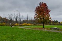 Autumn Foliage in Muskoka Fotografia Stock Libera da Diritti
