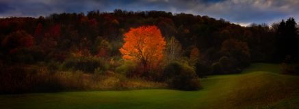 Autumn foliage, need lots of words!. Autumn foliage need a lots of words why Stock Images