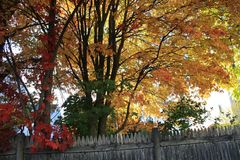 Autumn Foliage New England caliente Foto de archivo
