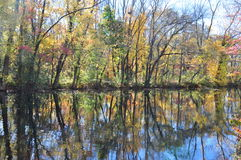 Autumn foliage: new jersey canal trail. Foliage, autumn, colors, water, reflection, trail, floating, leaves, trees, trunks,  Delaware & raritan canal Park, New Stock Photography