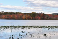 Autumn foliage in new jersey hillside, lake. Foliage, autumn, colors, water, lily, lilies, new jersey,  blue sky, clouds, landscape, lake, reservoir, hills Stock Photo