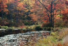 Autumn Foliage, New York State Royalty Free Stock Images