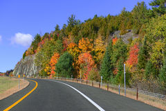 Autumn foliage in a Northeast forest. Fall colors, Autumn foliage in a Northeast forest Stock Photo