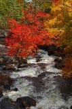 Autumn Foliage och flödande bäck Arkivfoto