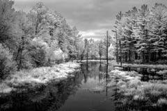 Autumn Foliage och träsk i nordvästliga Wisconsin i infrarött svartvitt royaltyfri foto