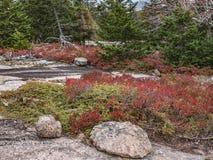 Autumn Foliage på det Pemetic berget, Acadianationalpark fotografering för bildbyråer