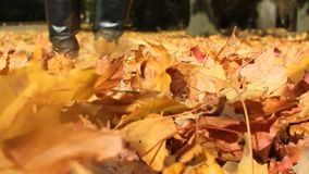 Autumn foliage in the park alley. The wind drives dry autumn leaves fallen to the ground stock footage