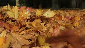 Autumn foliage in the park alley. The wind drives dry autumn leaves fallen to the ground stock video