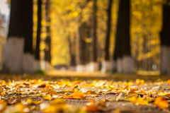 Autumn foliage in the park. City park, paths covered with falling leaves. Golden autumn Stock Image