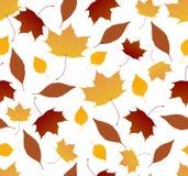 Autumn foliage pattern Stock Image