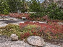 Autumn Foliage on Pemetic Mountain, Acadia National Park. Red fall foliage and pink granite bedrock are some of the colors of autumn seen in Acadia National Park Stock Image