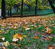 Autumn foliage Stock Image