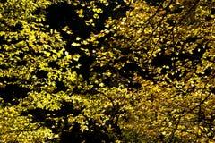 Autumn foliage Stock Images