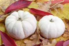 Autumn Foliage with Pumpkins Stock Images