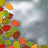 Autumn foliage rain background Royalty Free Stock Images