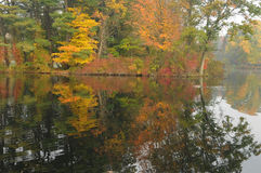 Autumn Foliage Reflection. In pond water Stock Photos