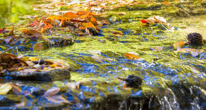 Autumn Foliage Reflections Stock Images