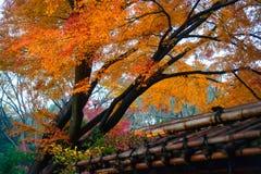 Autumn foliage in Rikugien Garden, Komagome, Tokyo Royalty Free Stock Image