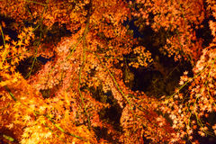 Autumn foliage in Rikugien Garden, Komagome, Tokyo. Rikugien is often considered Tokyo's most beautiful Japanese landscape garden. Built around 1700 for the 5th Royalty Free Stock Images