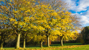 Autumn foliage at Roundhay Park Stock Image