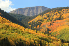 Autumn foliage San Juan Mountains. The many contrasting layers of Autumn Aspens and Evergreens decorate the slopes of the San Juan Mountain range in Southwest Stock Photo