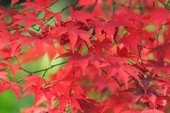 Autumn foliage in the Sankeien Garden, Yokohama, Kanagawa, Japan Royalty Free Stock Photos