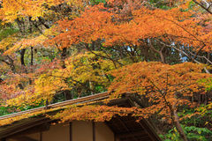 Autumn foliage in the Sankeien Garden, Yokohama, Kanagawa, Japan. Sankeien is a spacious Japanese style garden in southern Yokohama which exhibits a number of Stock Images
