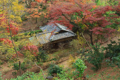 Autumn foliage in the Sankeien Garden, Yokohama, Kanagawa, Japan Stock Photo
