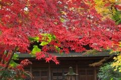 Autumn foliage in the Sankeien Garden, Yokohama, Kanagawa, Japan Royalty Free Stock Photo