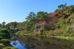 Autumn foliage in the Sankeien Garden, Yokohama, Kanagawa, Japan. Sankeien is a spacious Japanese style garden in southern Yokohama which exhibits a number of Royalty Free Stock Image
