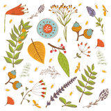 Autumn foliage set with twigs, flowers and leaves Stock Photos