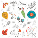 Autumn foliage set with twigs flowers and leaves Royalty Free Stock Photo