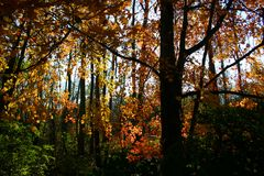 Autumn foliage and shadows Royalty Free Stock Images