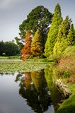 Autumn Foliage at Sheffield Park. Sheffield Park lake and gardens in Autumn, East Sussex, UK stock images
