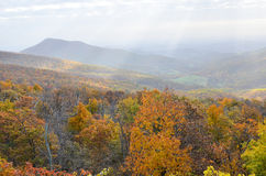 Autumn foliage in Shenandoah National Park - Virginia United States. Autumn foliage with misty sky in Shenandoah National Park - Virginia United States royalty free stock photos