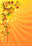 Autumn foliage on a solar background. For your design Royalty Free Stock Photography