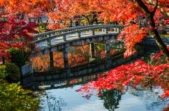Autumn foliage at the stone bridge Royalty Free Stock Images