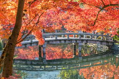 Autumn foliage at the stone bridge in Eikando Temple Stock Images