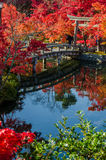 Autumn foliage at the stone bridge in Kyoto, Japan Royalty Free Stock Photos